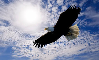 Soaring-Eagle-1