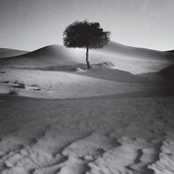 Single-Tree-60x22